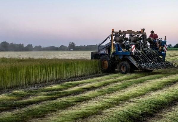 Bonne filière CELC - European Confederation Of Flax and Hemp